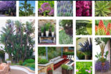 Courtyard planting concepts.
